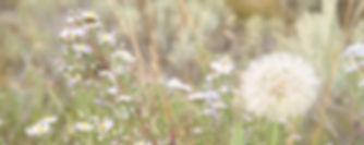 Bee and dandelion.JPG