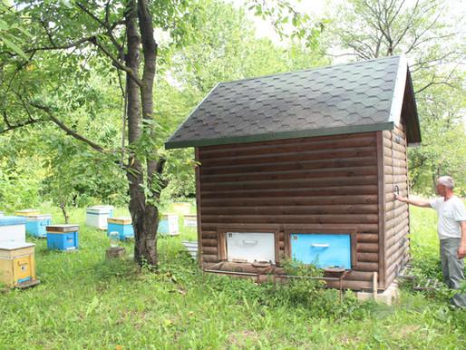 Цілющий будиночок над бджолами