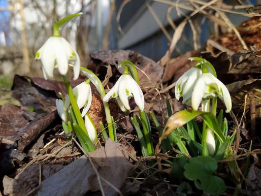 Квітень прийде з потеплінням. А далі прогнозують грози