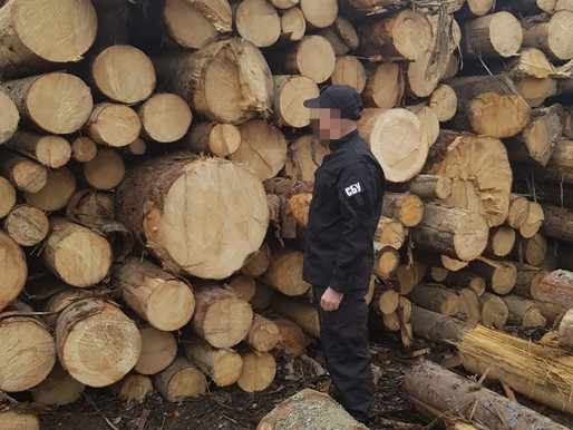 Продавали ліс із заповідної зони на Буковині