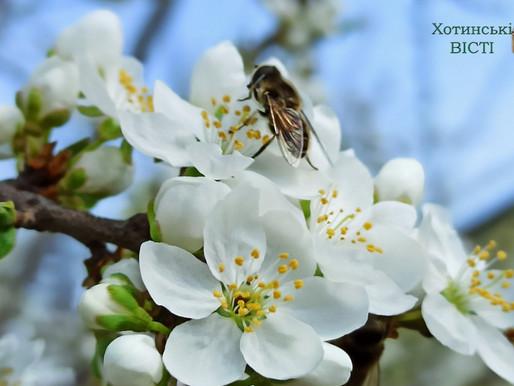 Загинуть бджоли, загине і людство