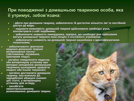 Поліцейські розпочали кримінальне провадження щодо жорстокого поводження з тваринами (ОНОВЛЕНО)