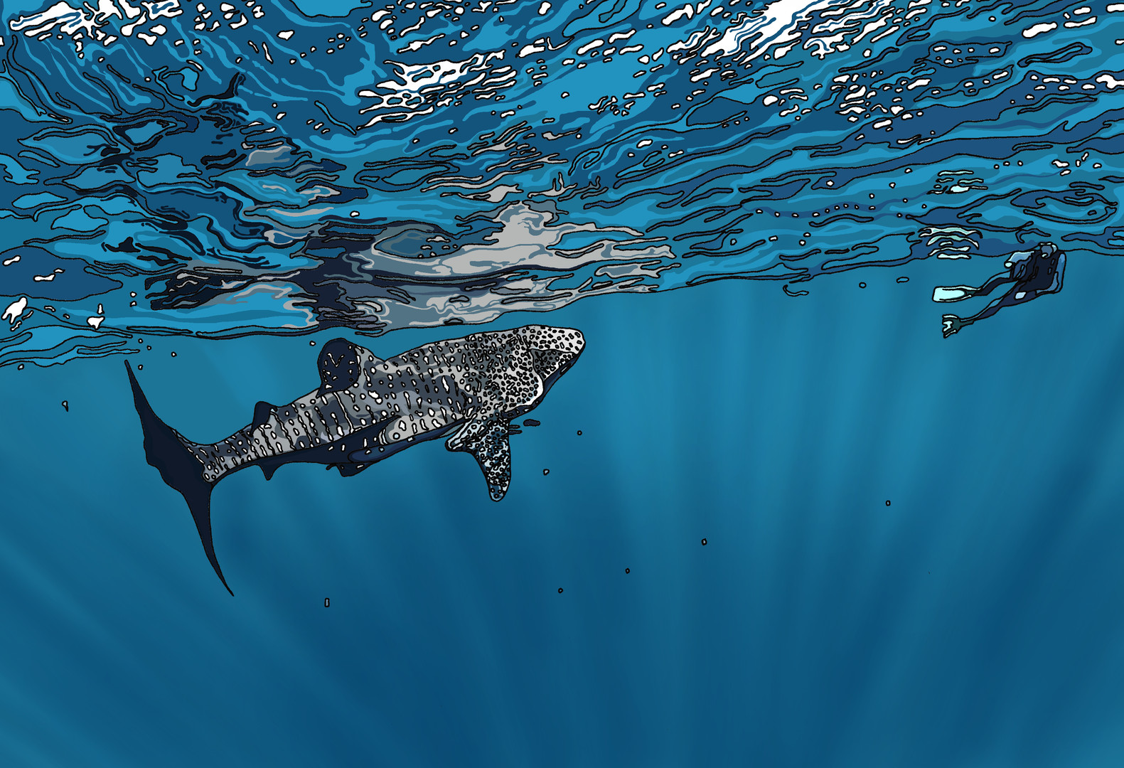 COMMISSIONED: WHALE SHARK ON THE NINGALOO COAST