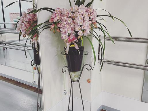赤坂スタジオへ春の風🌸