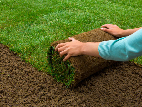 Can you install sod yourself?