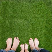 Bare Feet Tall Fescue