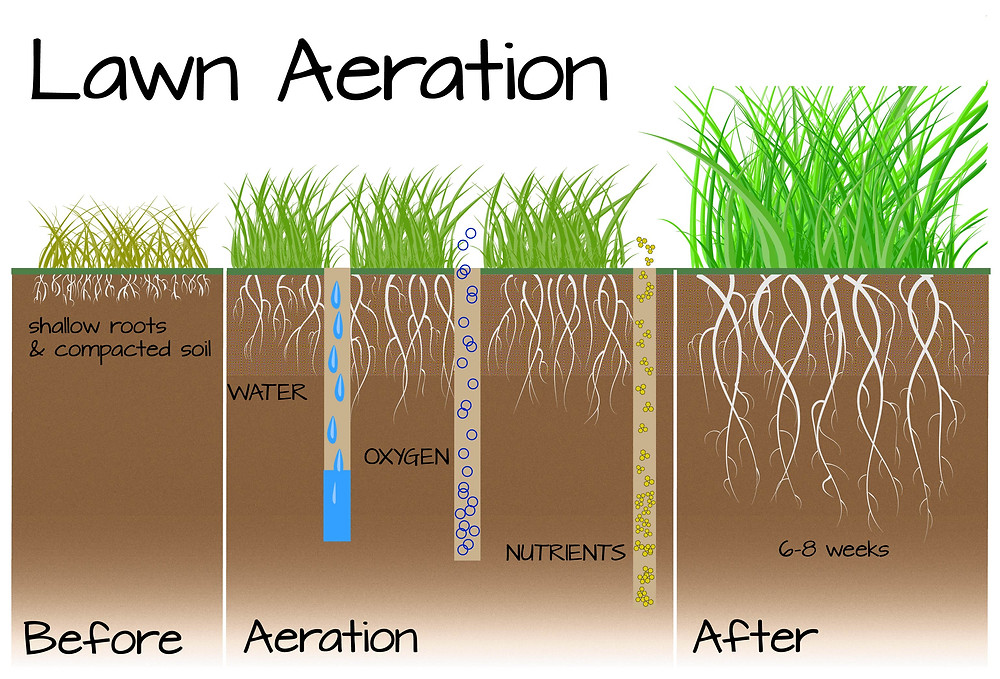 Why Should I Aerate My Lawn And How