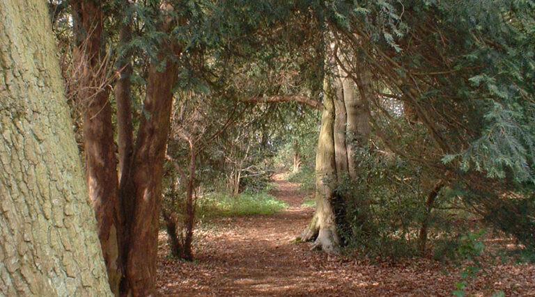 The Redfield Woods