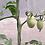 Thumbnail: Huertos orgánicos