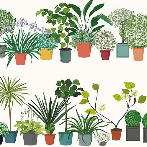 Patio Plants White