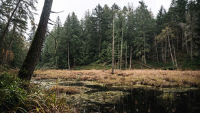 Volunteer opportunity: Help us heal the land at Flycatcher Forest