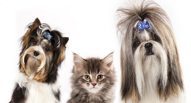 all dog and cat groom