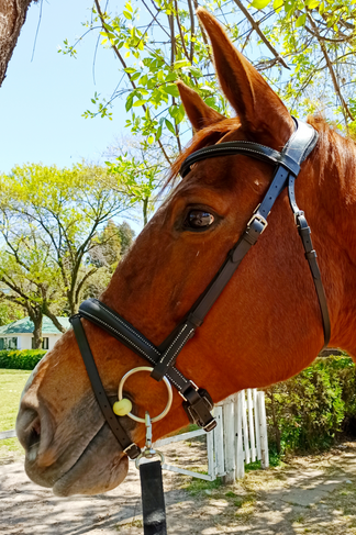 TYRION BRIDLE