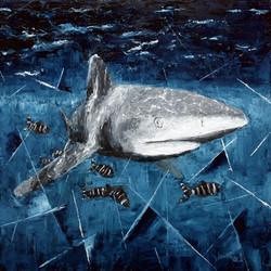 Shark Longimanus