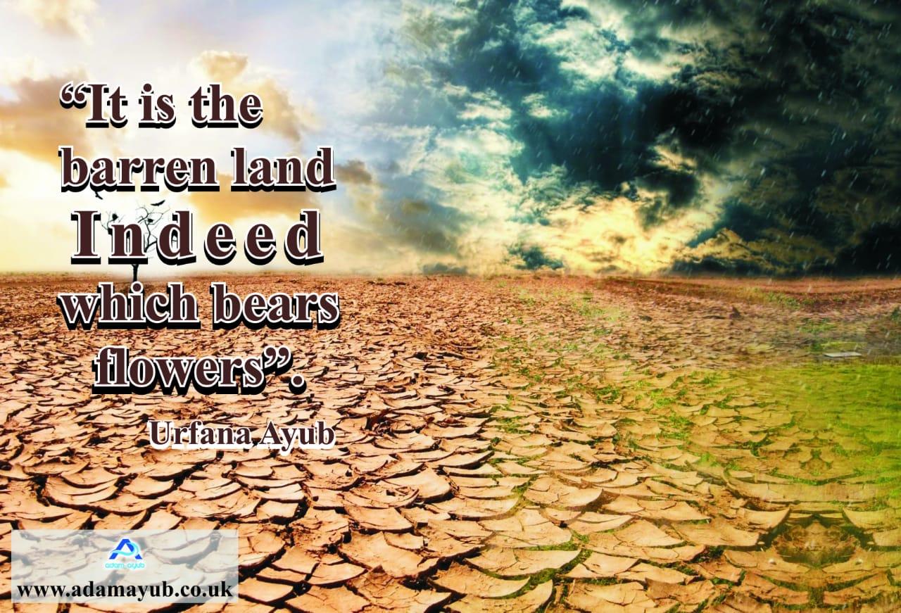 Barren land -flowers Q