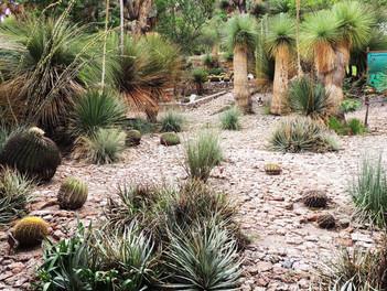 Jardín Botánico Regional de Cadereyta