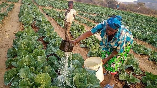 Zimbabwe-Marian-and-Svondo-Lent-2018.jpg