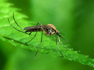 Mosquito Treatment Promotion