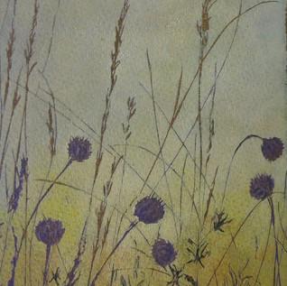 Morning Meadow...