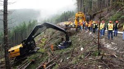 logging image.jpeg