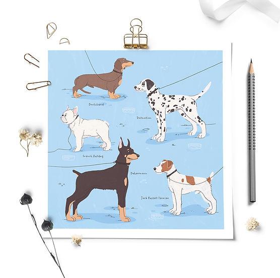 Dog breeds Gosia Grodzka