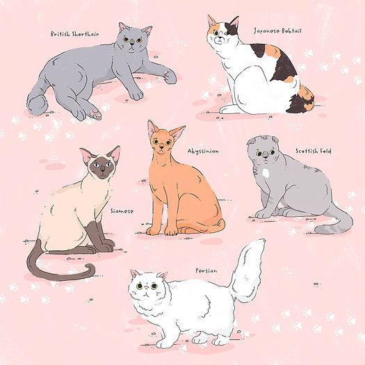 Cat breeds Gosia Grodzka