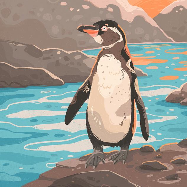 Galapgos Penguin