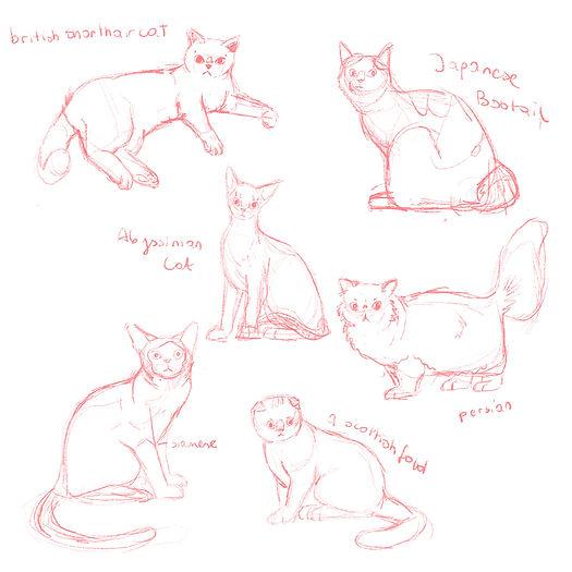 Cats by Gosia Grodzka