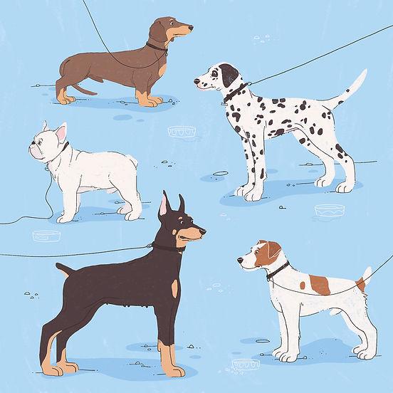 Dog breeds by Gosia Grodzka