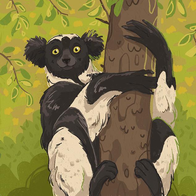 Indri