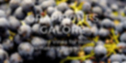 Front Page ScreenShot.jpg