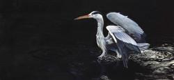 ferrand_bird1