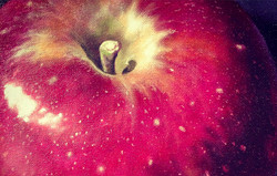 houghton_apple_edited