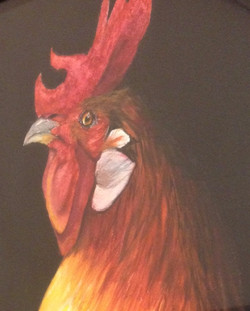 ferrand_rooster_edited