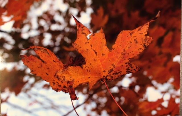 hann_leaf