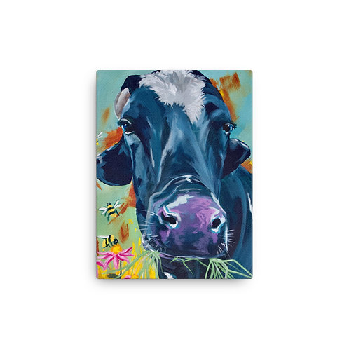 Mason the Dairy Steer Gallery Wrapped Canvas