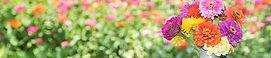 Wild flowers.jpg