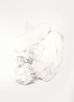 Sleeping Wolf study