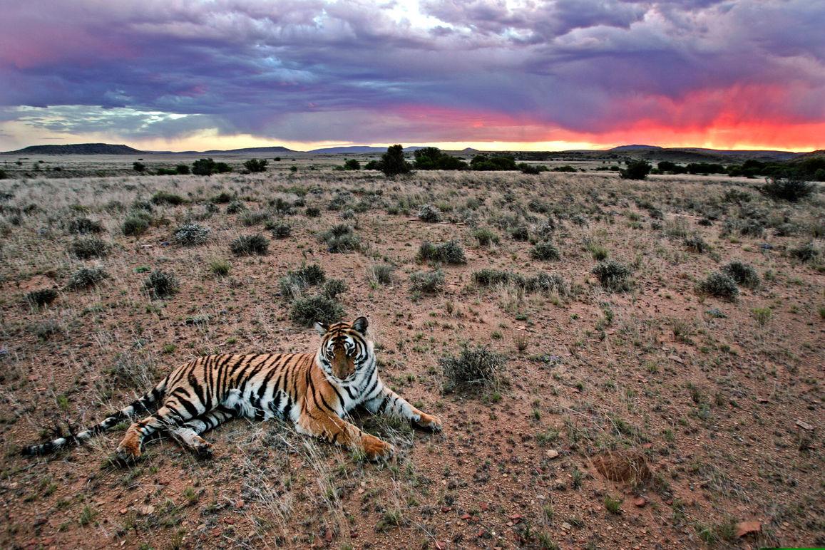 South_China_Tiger_036.jpg