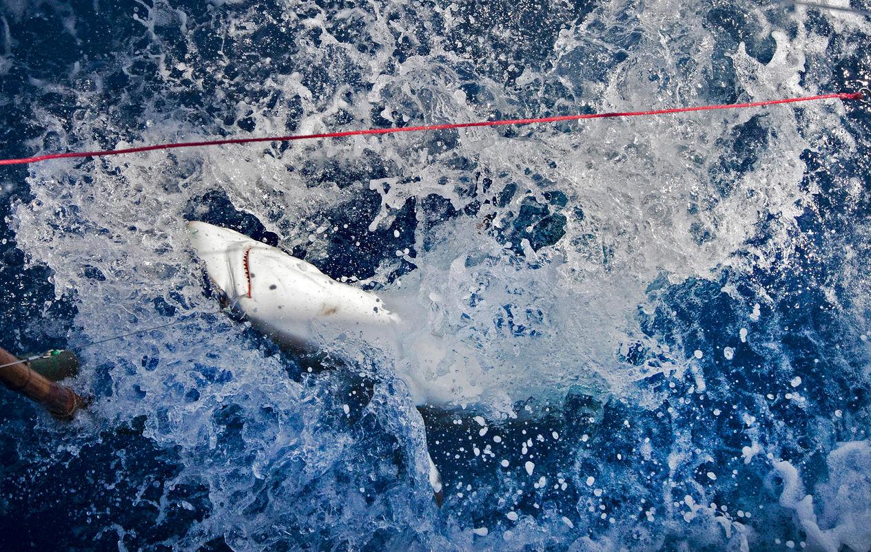 sharksfin12.jpg