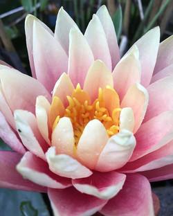 yourself steal the sunshine, keep bloomi