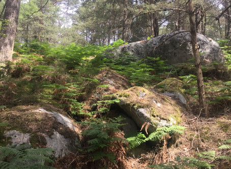 Let's Go for a Walk: The Forest of Fontainebleau