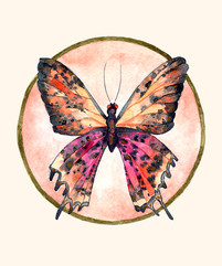 Mariposa-circulo.jpg