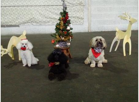 Christmas Fun Dog Show