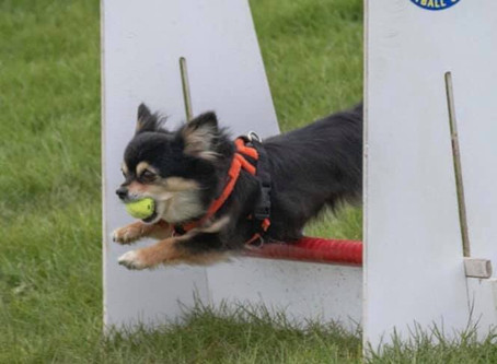 Flyball Workshop 10th August