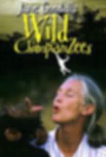 wild-chimpanzees.jpg