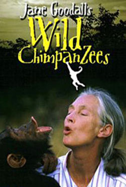 wild-chimpanzees.jpg