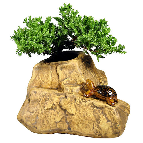 Bonsai in Stone Pot with Turtle