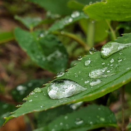 Gota de chuva na folha - Xiaomi MiA1