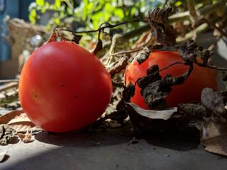 Tomates - Xioami Mia1 - Dual Camera.jpeg
